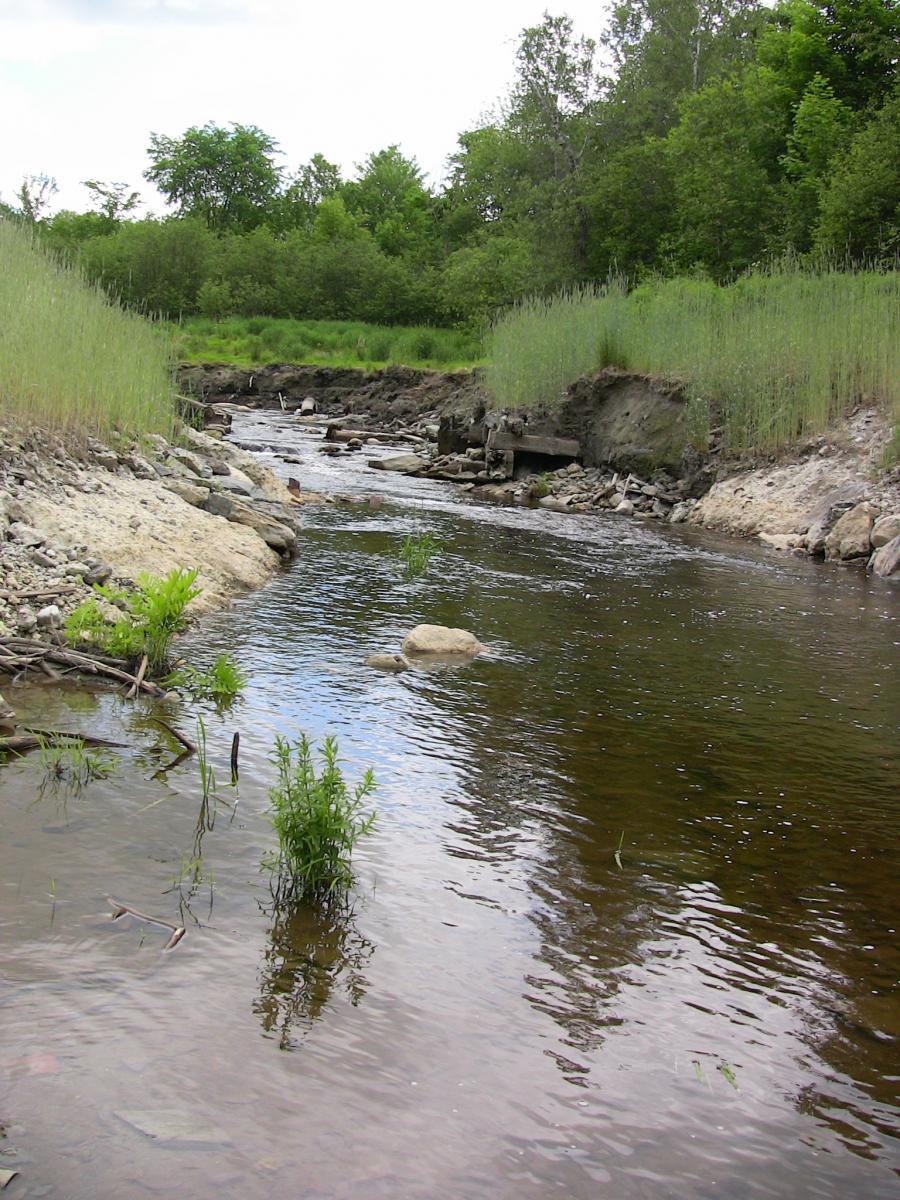 restored reach of stream