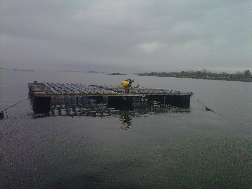 two men working on top of a mussel raft on an overcast day