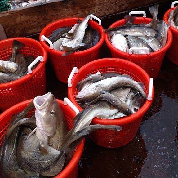 Photo of cod in red buckets