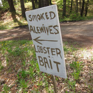 sign reading 'smoked alewives lobster bait'