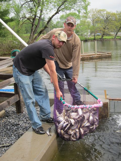 Zeb Woodbury and friend fish alewives out of Seven Mile Stream