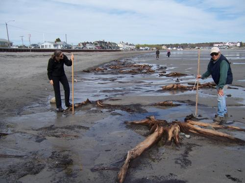 Two men on a beach next to a tree stump