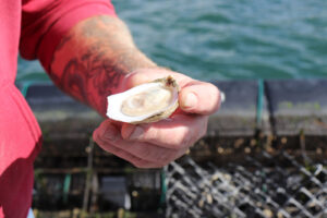 A hand holding an oyster on the half shell with water in the background
