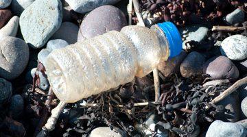 an empty discarded plastic bottle