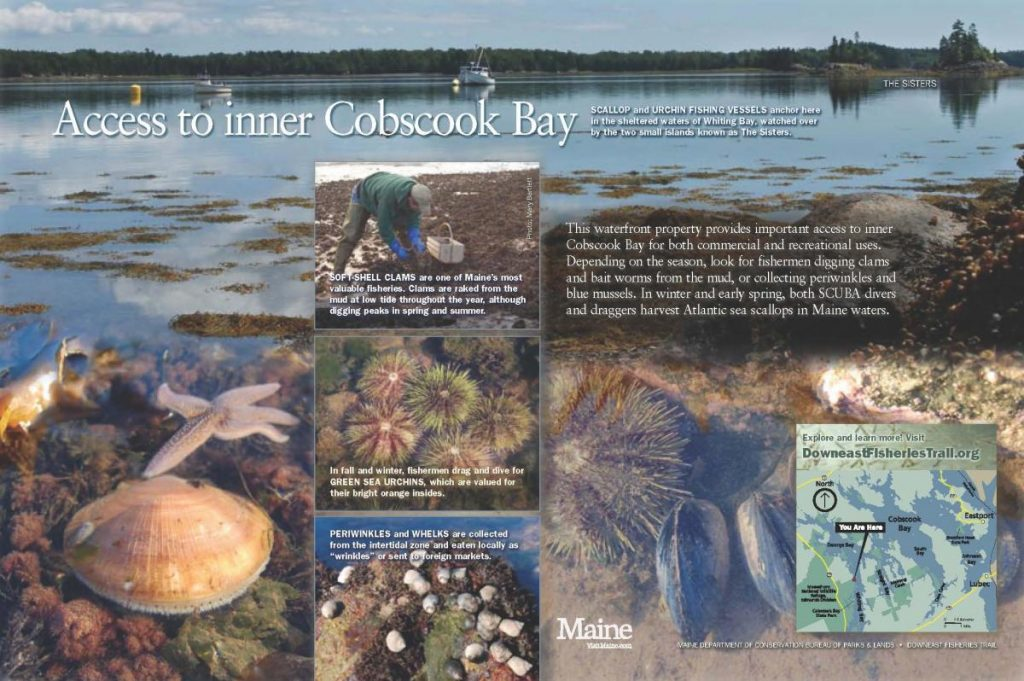 Cobscook Bay panel
