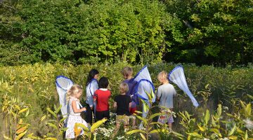 a group of children holding butterfly nets