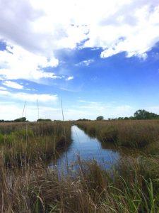 a waterway through wetland vegetation under a blue sky