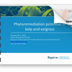 Price presentation on Phytoremediation potential of kelp and eelgrass