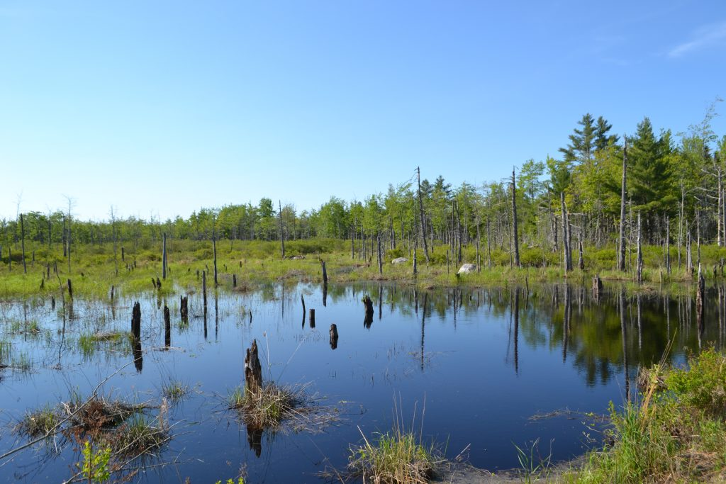 Dead standing trees in water.
