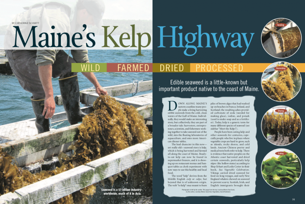 magazine spread of the Maine's Kelp Highway article