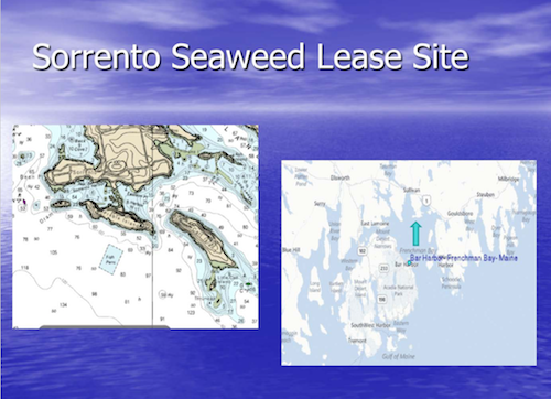 Cover slide for Sorrento Seaweed Lease Site presentation