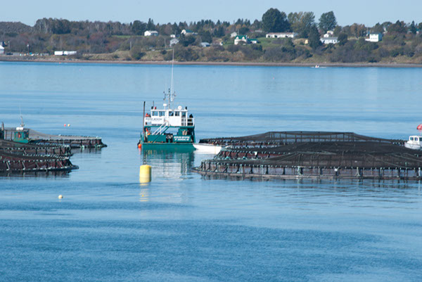 Salmon net pens with a working boat between them