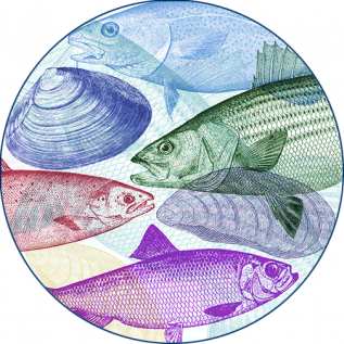 layered fish and shellfish image, decorative