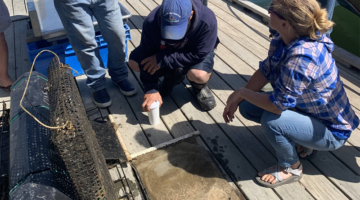 people on a dock looking at clam nursery equipment