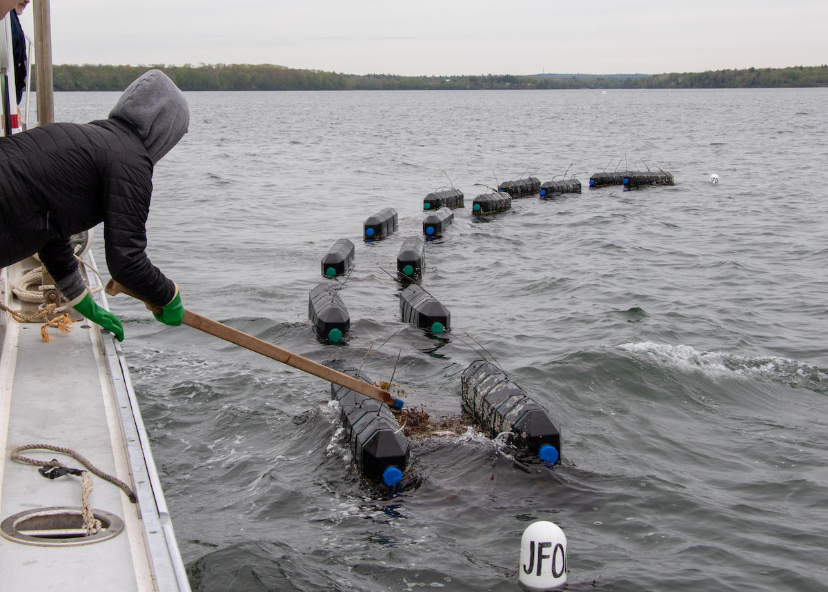 person tending aquaculture cages from a boat