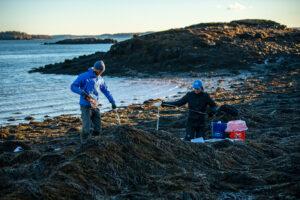 Two graduate students measuring among rockweed
