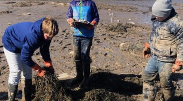 three young students on a beach examining seaweed