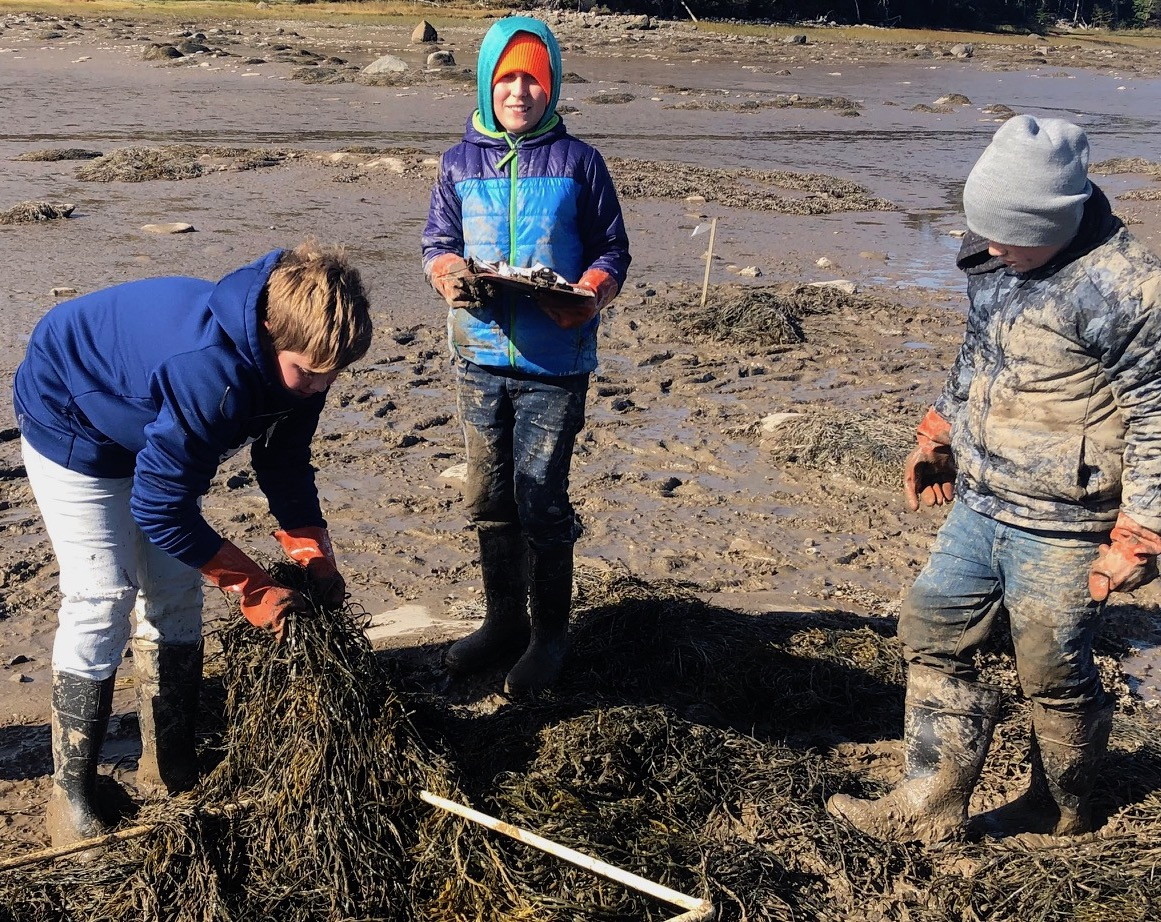 featured image for Coastal Conversations Radio Program: Mudflat Classrooms