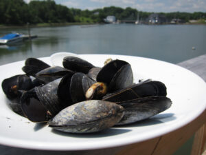 blue mussels on a plate