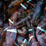 A crate of lobsters is seen at Cape Porpoise, Saturday, Aug. 24, 2019, in Kennebunkport, Maine.