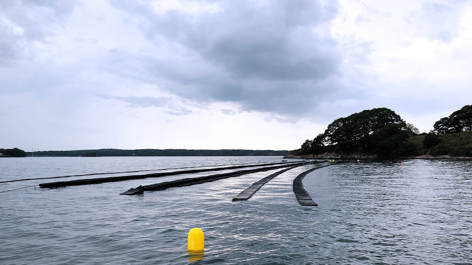 Three rows of oyster cages at Butterfield Shellfish Company's oyster farm in Casco Bay with land and trees in the background.