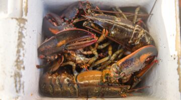 lobsters in a box, decorative