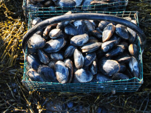 a basket full of shellfish, surrounded by seaweed.
