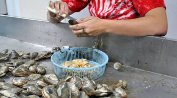 a person shucking clams in a large metal trough