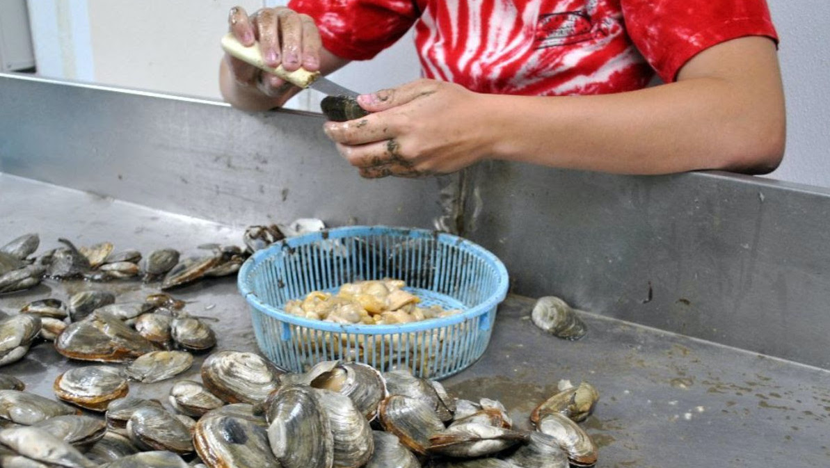 featured image for Coastal Conversations Radio Program: From the mud to your plate, shellfish markets and the seafood supply chain (Shellfish Focus Day #3)
