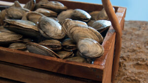 a basket of clams